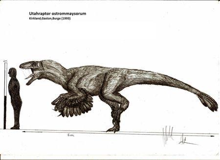 Utahraptor_ostrommaysorum_by_teratophoneus-d4oq7xm