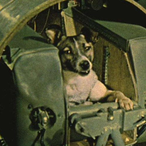 NSC-Laika60-Whats-On-General-Image-6